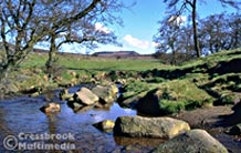 The Longshaw Estate